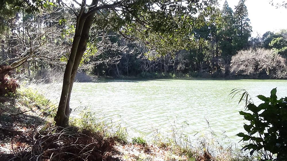 森の道から見た雄蛇ヶ池